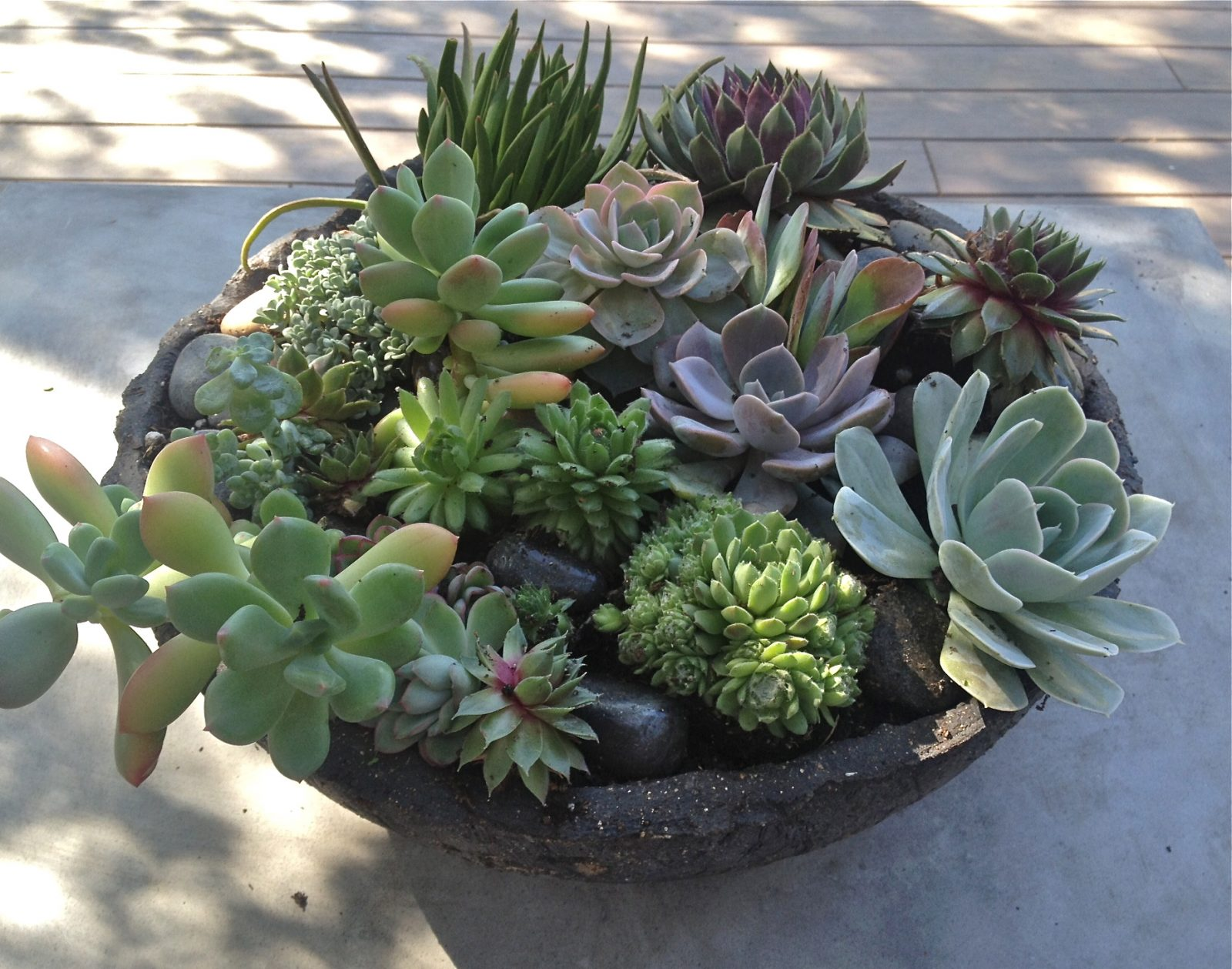 301 moved permanently for Garden arrangement of plants